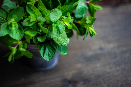 Organic food concept with fresh green leaves of mint plant