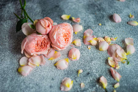 Beautiful floral card concept with fresh roses on concrete background with copy space