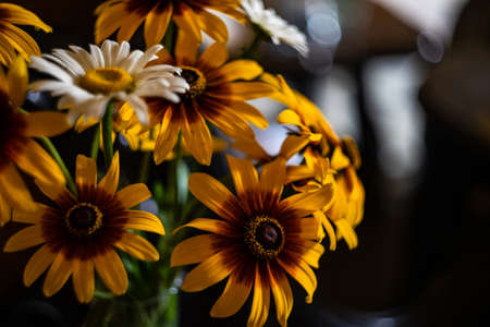 Beautiful summer bouquet with coreopsis flowers Stock Photo