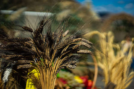 Baking background with wheat spica,  flour, wheat seeds, oil on dark board Stockfoto