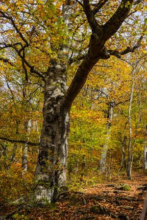 Forest pathway in autumnal Caucasus mountan in Tianeti area in Georgia Archivio Fotografico