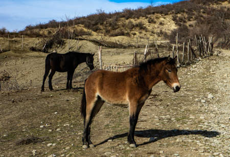 Cute horse animal in mountain field in winter time