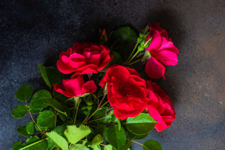 Fresh red roses on dark concrete background with copy space as a gift card concept Archivio Fotografico