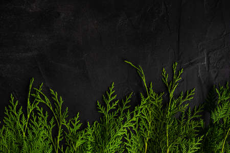 Christmas frame concept with fresh green thuja branches on black concrete background with copy space