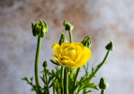 Yellow flowers in pot as a spring composition for Easter holiday decoration