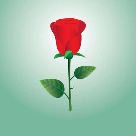 A red rose flower with green background for gift Vector illustration.