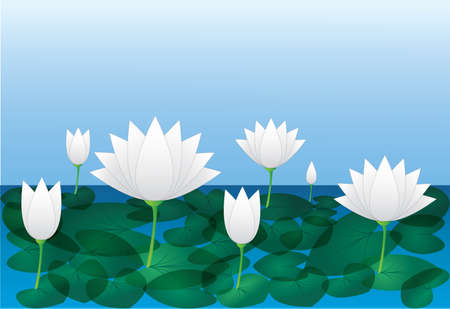 Cool and beautiful white lotus flowers with leaf in the river water with blue sky