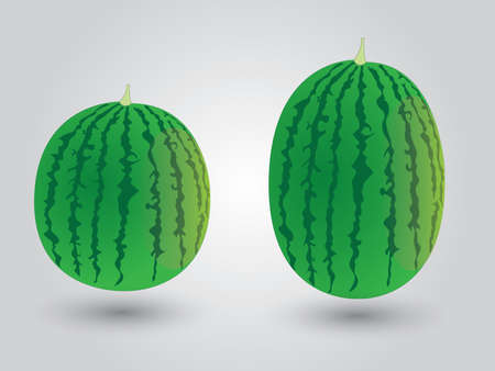 Fresh green watermelon on white background vector
