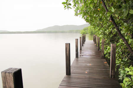 Mangrove forest near lake photo