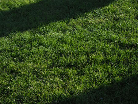 Close-up of green spring grass with bright sunlight. Sunny spring background. Beautiful shadows on the fresh grass. Stock Photo