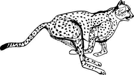 Cheetah during the chase,   Black liner continuous line Illustration. Wildlife, running animal Vector illustration.