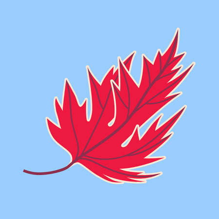 Autumn fallen maple leaf. He slightly bent, fell to the ground, windy, warm and cold - the color gamut 向量圖像