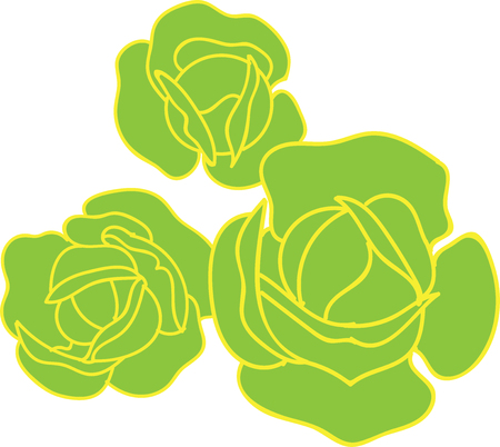 Ordinary cabbage, Three vegetables as in  garden, top view of green with yellow outline, nutritious food, healthy food, vegetarian cuisine.