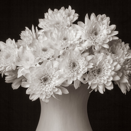 bouquet of flowers - Small white chrysanthemum more than 10 pieces in a vase on a completely black background