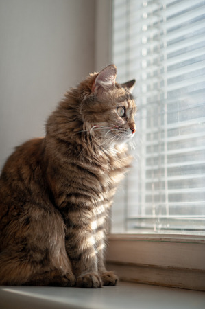 The cat on the window sill near the window looks at the sacred area through the blinds and dramatic lighting from one side