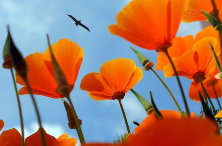 orange flowers on background of blue sky, bird flying