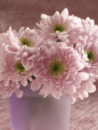 bouquet of pink flowers in vase, magenta toning