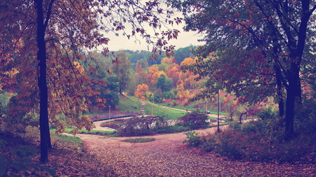 Autumn landscape with trees, panoramic view of park