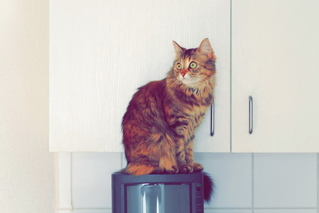 A cat sitting in the kitchen on TV looking to the side against the white door of the kitchen cabinet.
