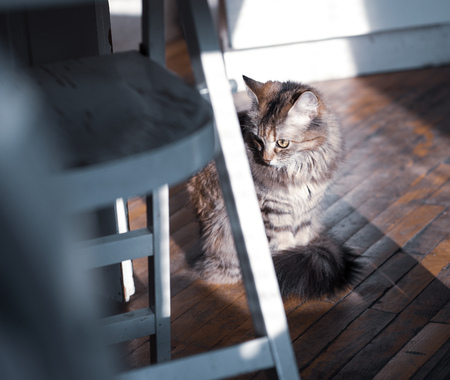 cat in the kitchen on parquet near stool, the dwelling of the poor man, sunlight strips Reklamní fotografie