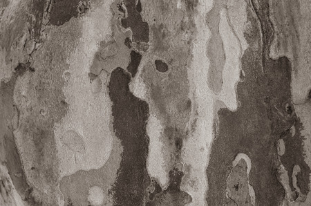 texture of old tree, flat surface with round shapes Reklamní fotografie - 116373896