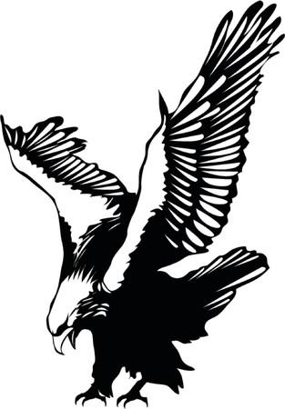 aigle: Aigle de vol de vecteur Illustration
