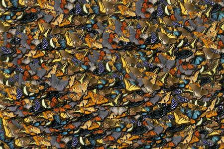 Bunter Schmetterlingshintergrund-Sommerherbst Standard-Bild - 69912942