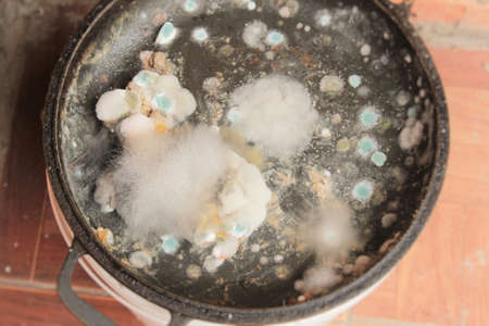 Rotten and moldy food closeup on a pan isolated Standard-Bild - 87881863