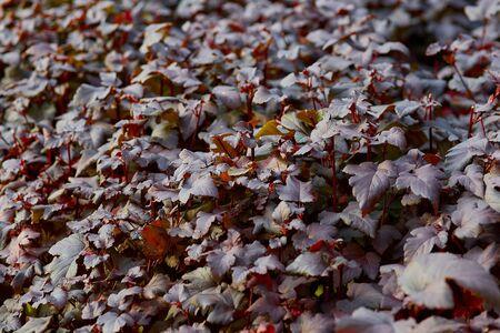 dark shrub pattern close-up in autumn