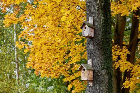 birdhouses on a tree on a background of yellow maple