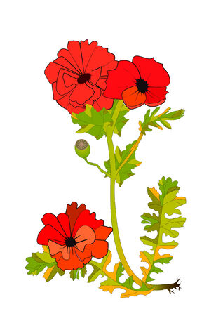 Poppy flower Stock Vector - 5933136