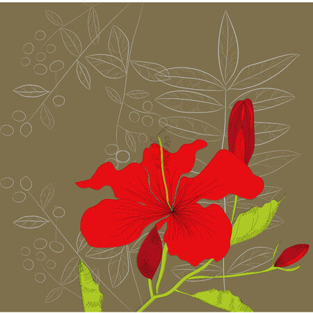 Decorative background with Hibiscus flowers Vector