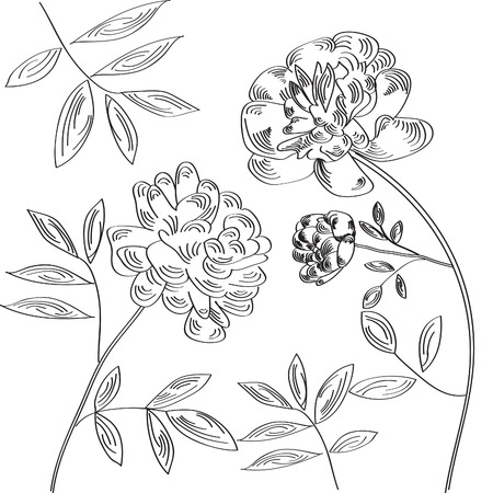pion: Hand-drawn floral background with pion flowers Illustration