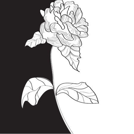 Black and white template with rose flower Vector