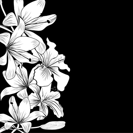 lilies: Black and white background with white flowers
