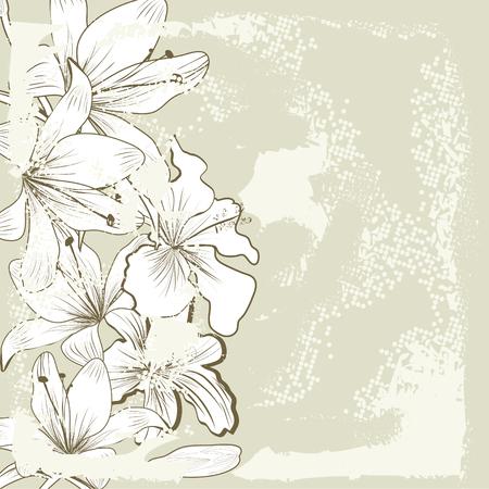 lily flowers: Retro baskground estilizada con flores de lirio blanco