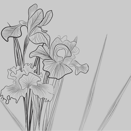 Monochrome illustration with Iris flowers Vector