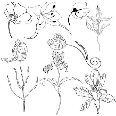 iris flower: Set of flowers 4 Illustration