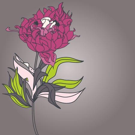 pion: Pion flower Illustration