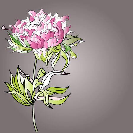 pion: Paeonia flowers