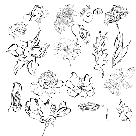 Set of flowers Stock Vector - 8640331