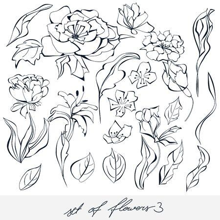 art painting: Set of flowers 3 Illustration