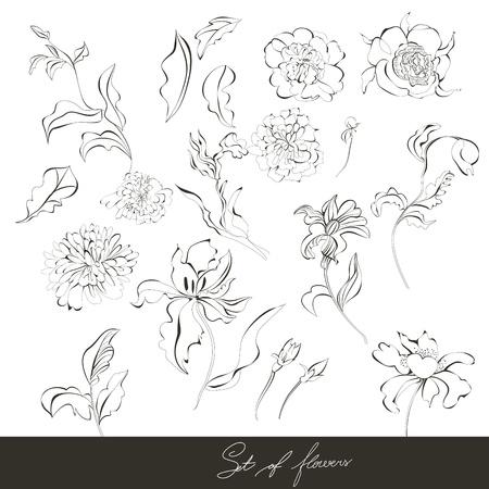Set of flowers Stock Vector - 9513119
