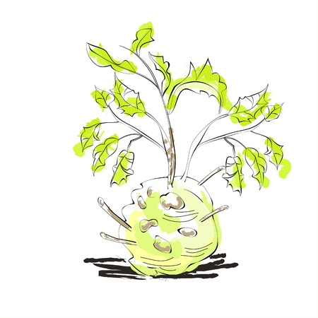 celery: Illustration of celery with root leaf
