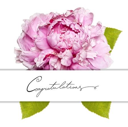 congratulation card: Congratulation card with peony flower