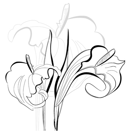 stamens: Monochrome illustration calla lilies flowers