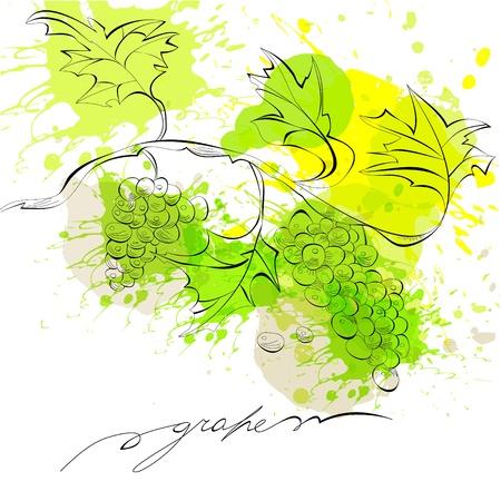 grape juice: Sketch of grapes