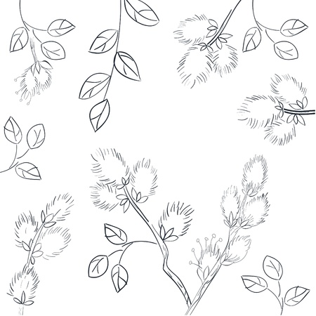 pussy willow: Floral background with pussy willow