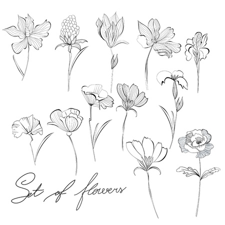 Sketch of flowers Stock Vector - 10406341