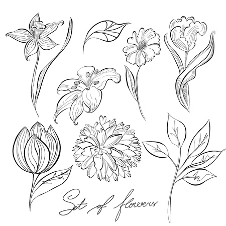 scribble: Sketch of flowers